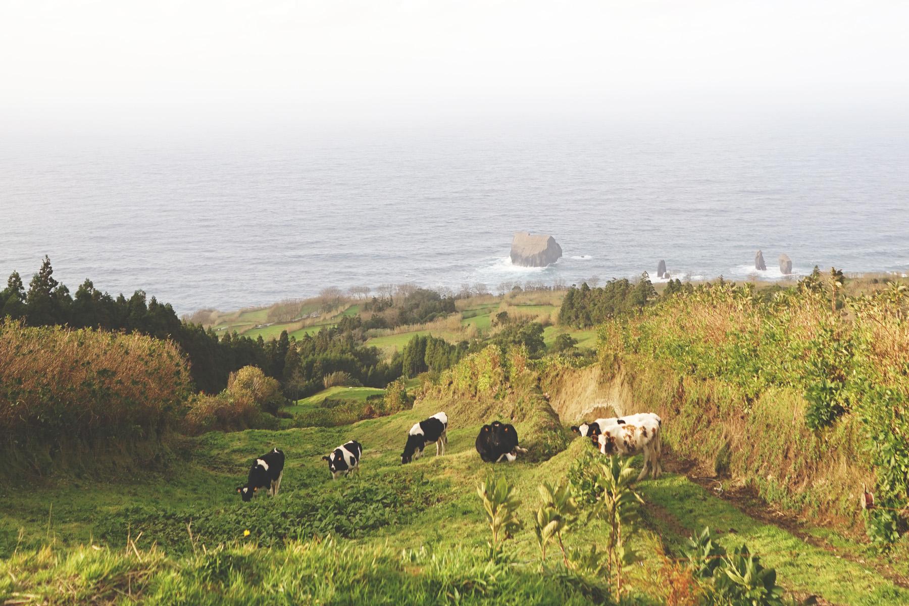 Miradouro-Ponta-Escalvado-001.jpg