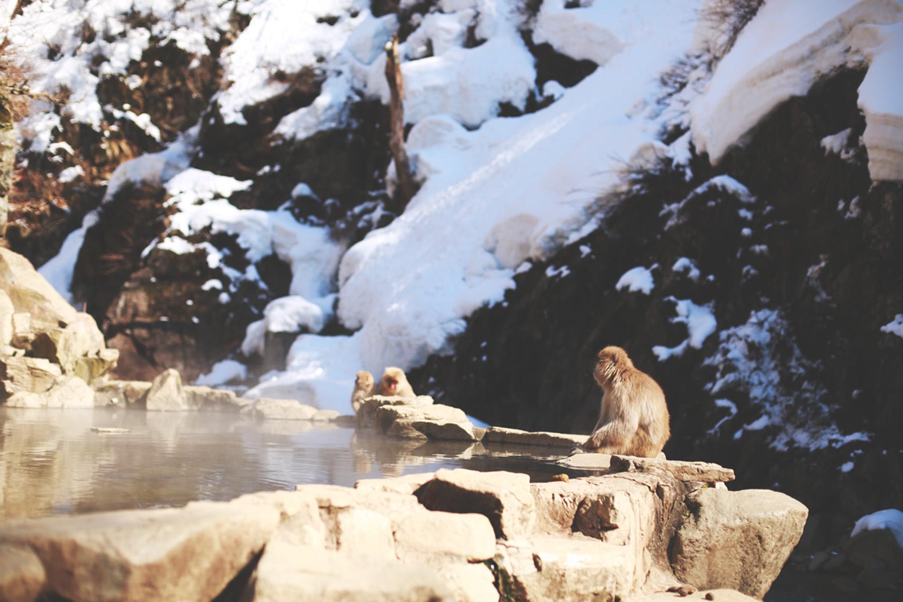 & Away We Went | Jigokudani Monkey Park
