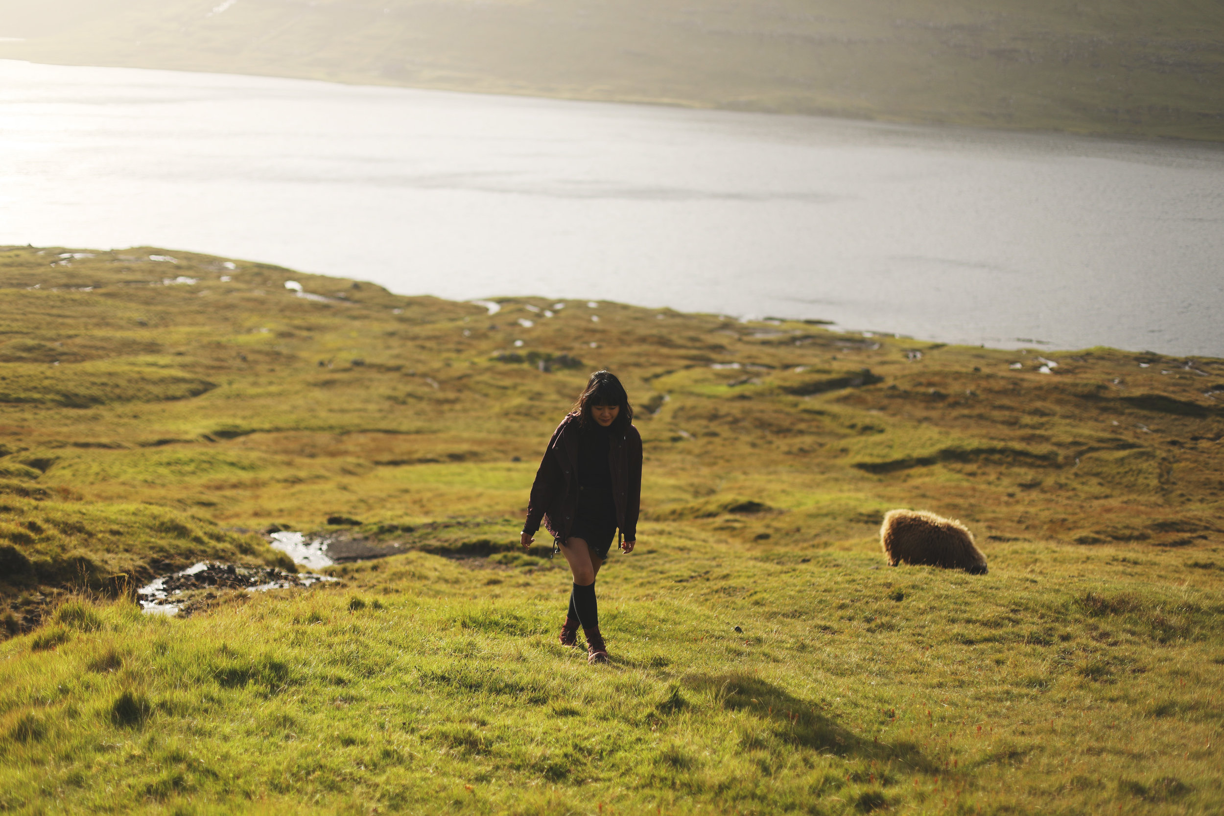 Hiking alongside some local sheep as the sun sets upon the lake.