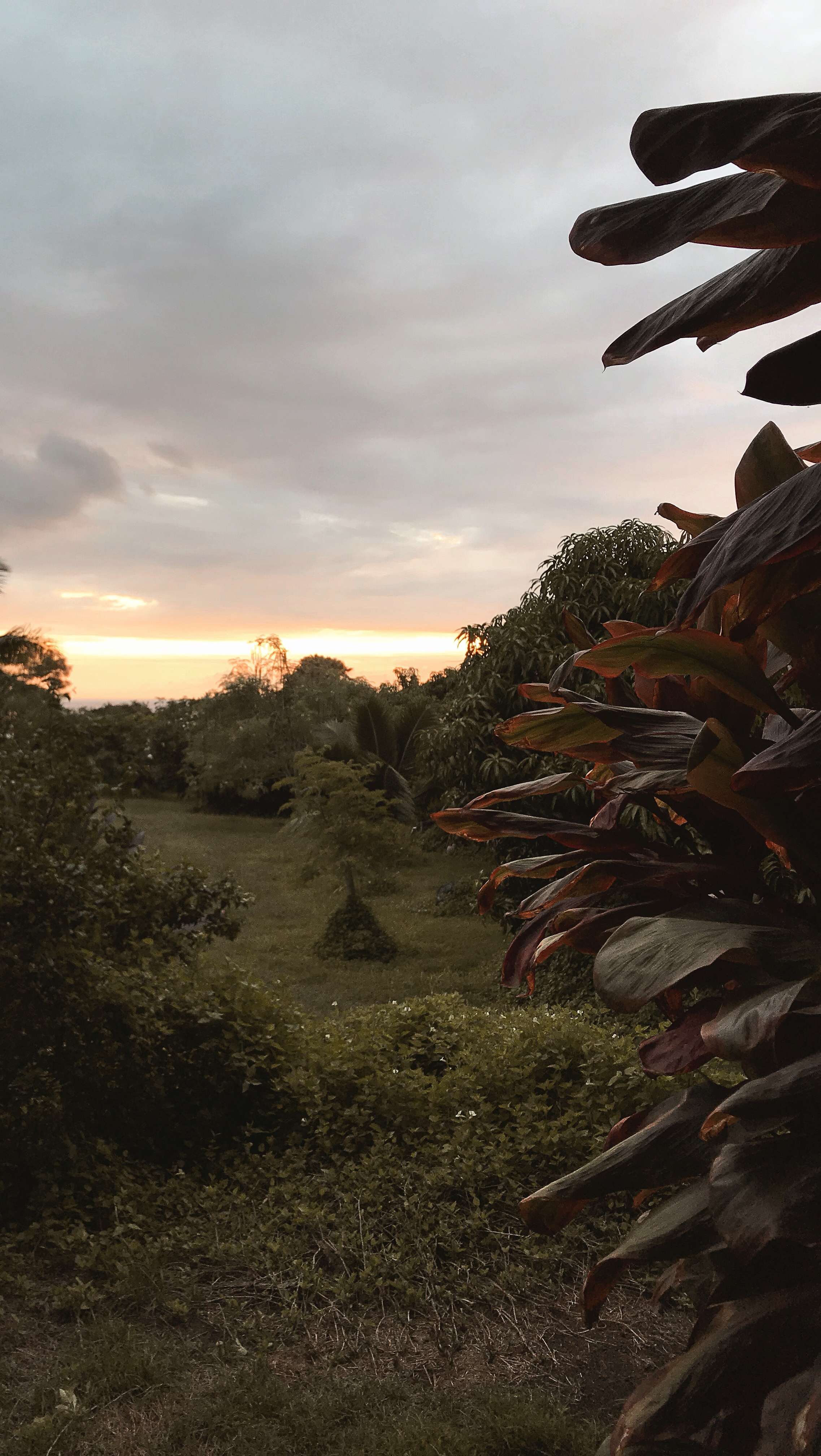 The Big Island, Hawaii | Off-the-Grid Airbnb Adventures | Outdoor Mango Farm | Where to Stay
