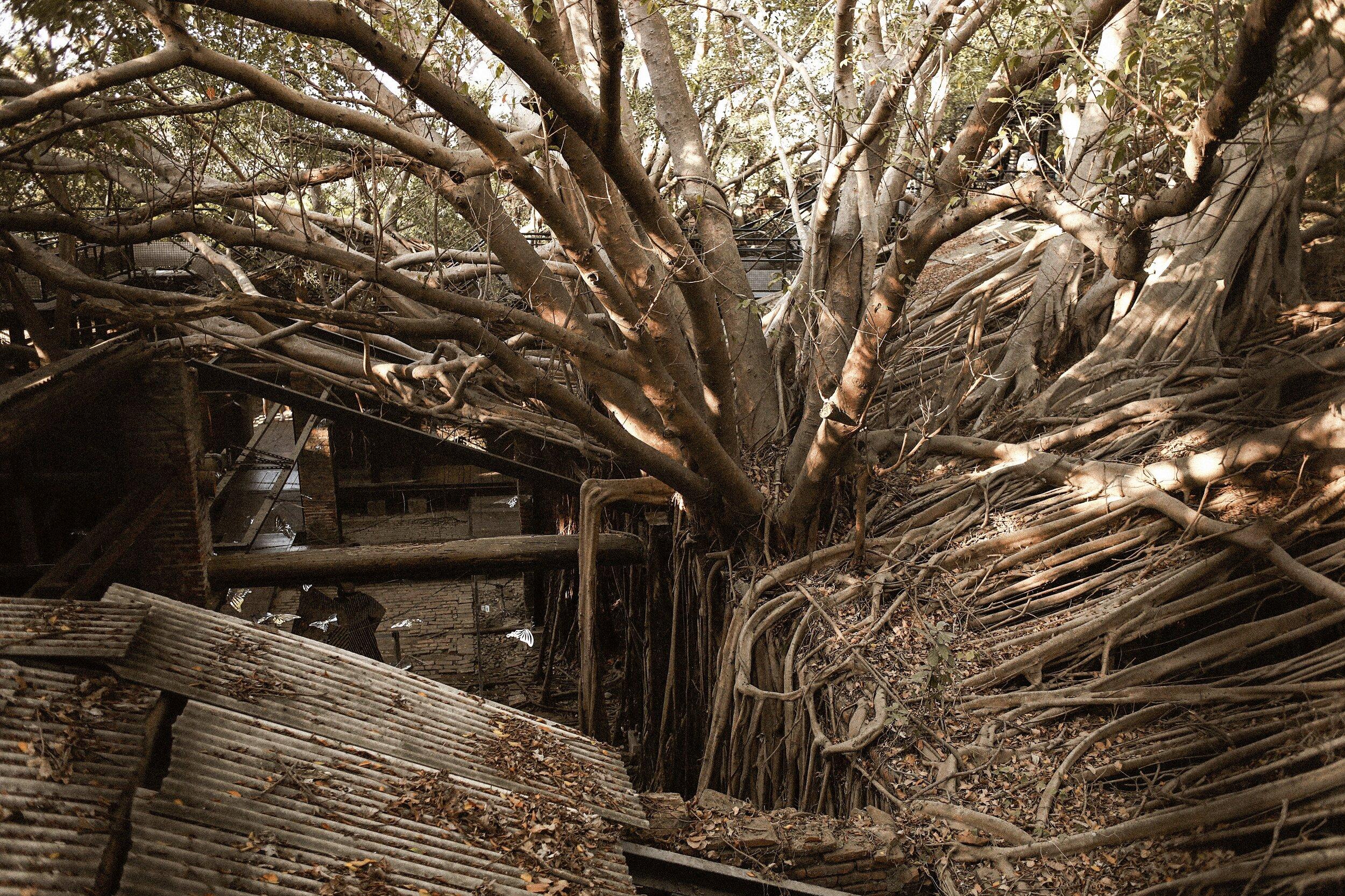 Tainan, Taiwan | Anping Tree House