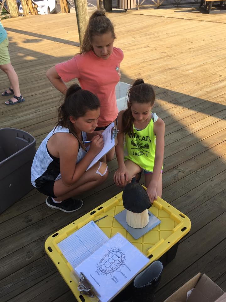 Volunteers help the Terrapin Institute identify collected turtles