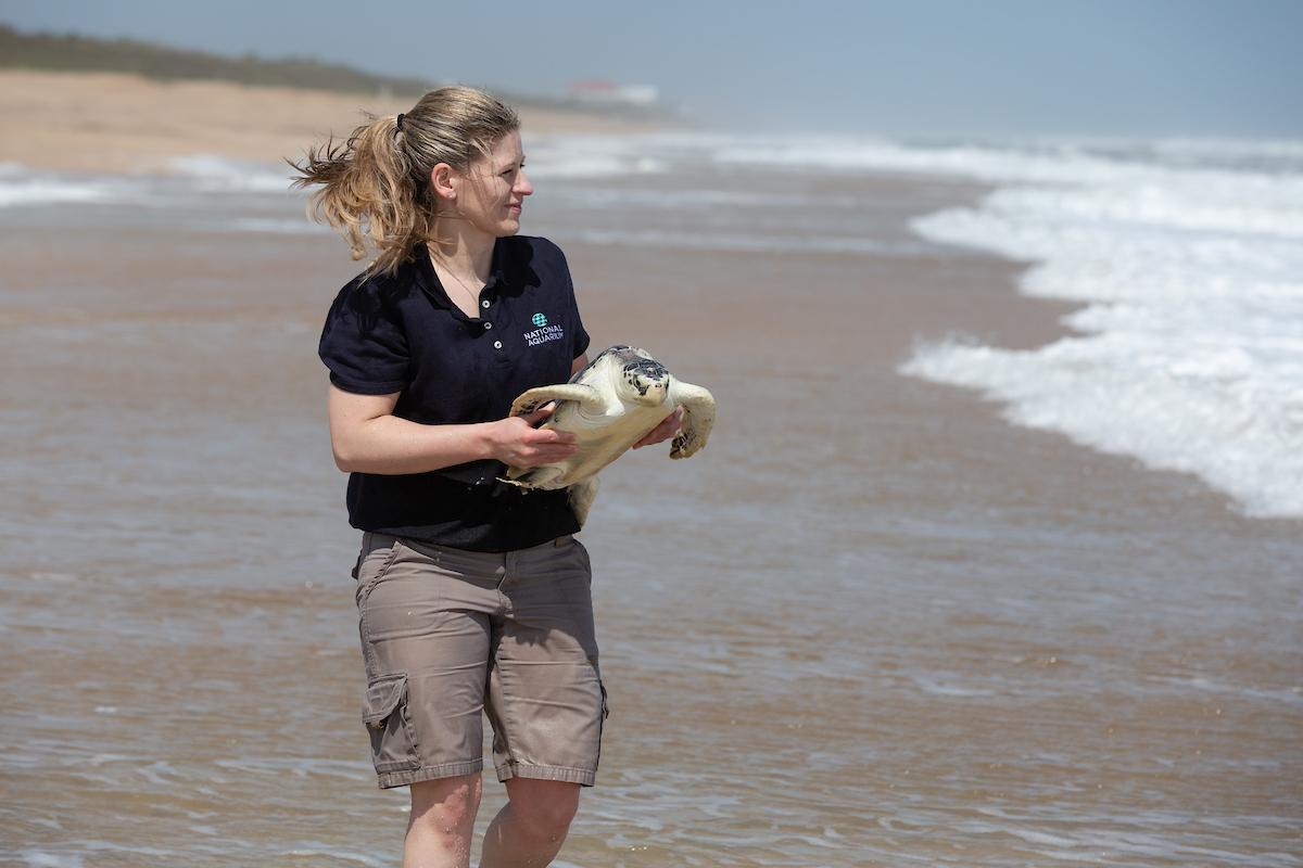 National Aquarium staff release 11 rehabilitated sea turtles at Canaveral National Seashore in Florida.