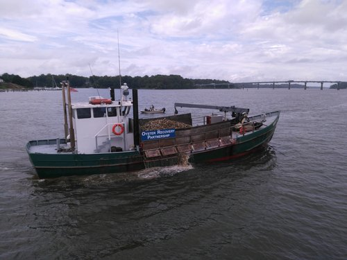 An Oyster Recovery Partnership boat loaded with million of oysters during the 2018 Build-a-Reef planting. Photo: Charlie Youngmann