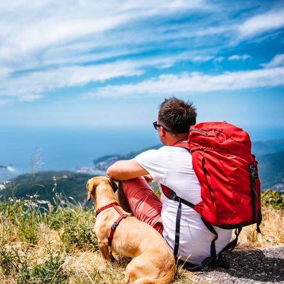small-dog-hike-overlook.jpg.838x0_q80.jpg