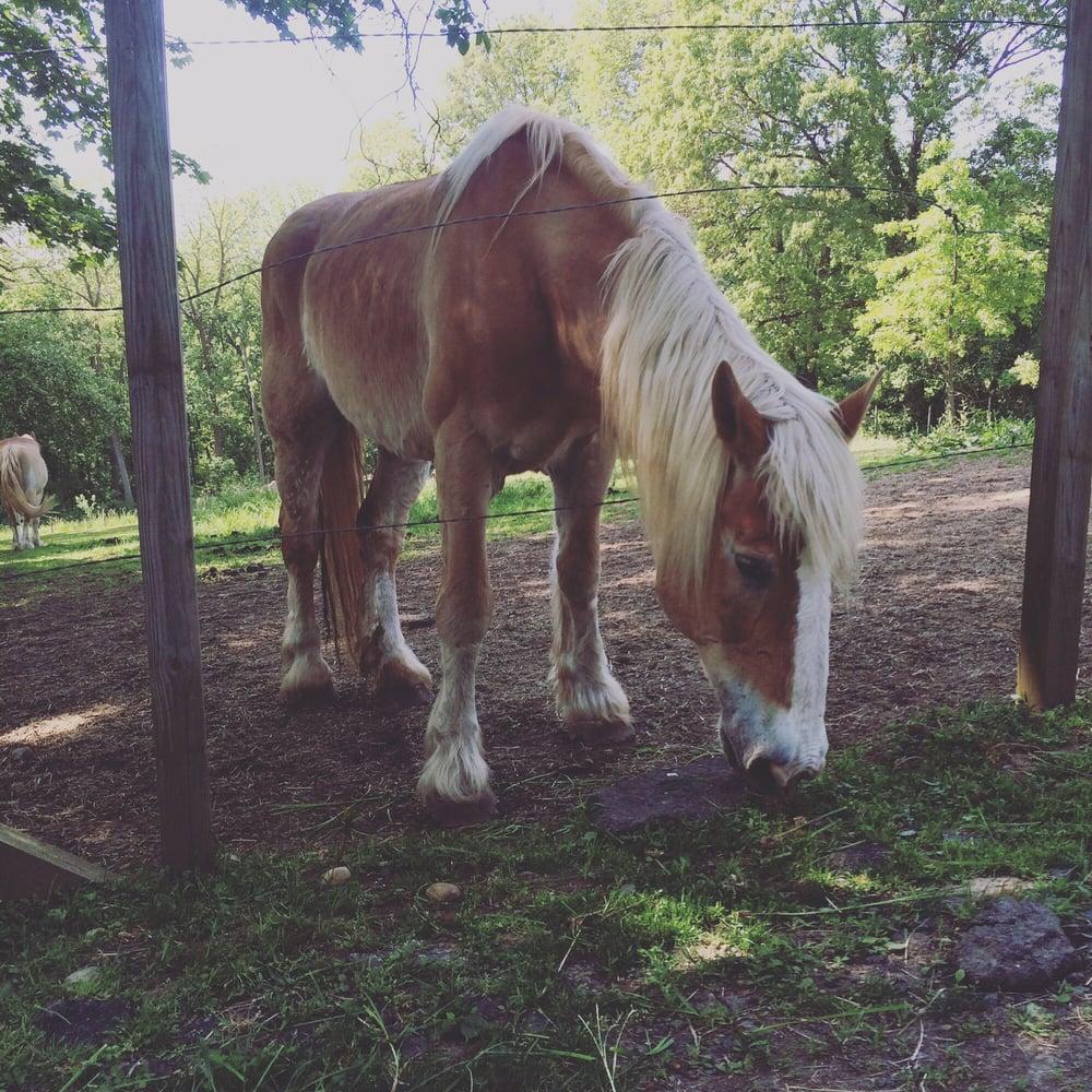 b&B horse.jpg