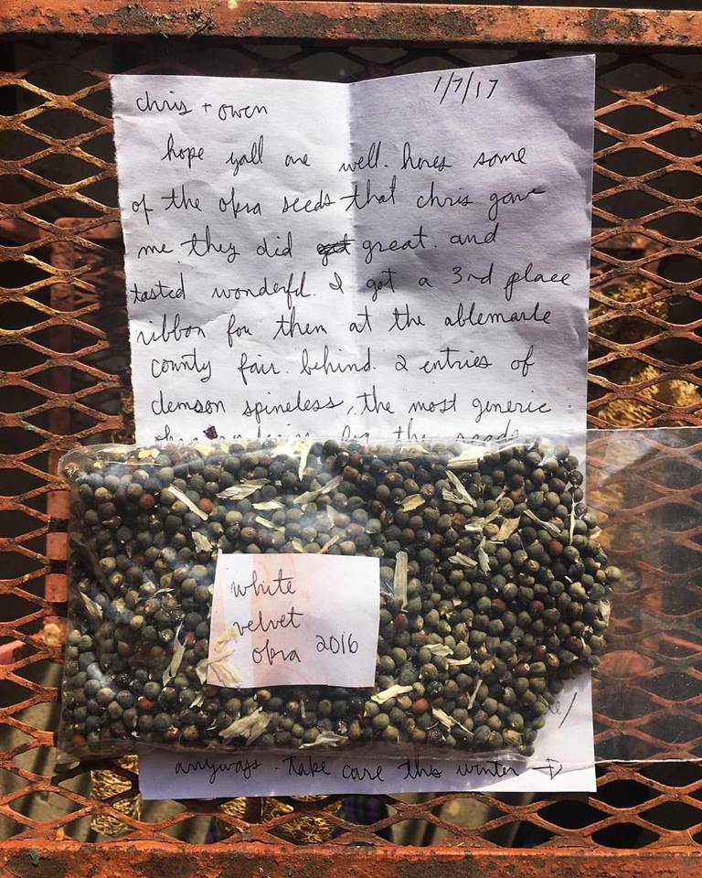 "From Owen's instagram: ""My friends Mason and Wiley from Bear Bottom Farm in Dillwyn, Virginia grew White Velvet Okra from seeds we shared with them. They sent back this fresh seed with a note from Mason: 'They did great and tasted wonderful. I got a 3rd place ribbon for them at the Abermarle County Fair behind two entries of Clemson Spineless, the most generic okra. Wiley cleaned up in the oddball veggies category'."""