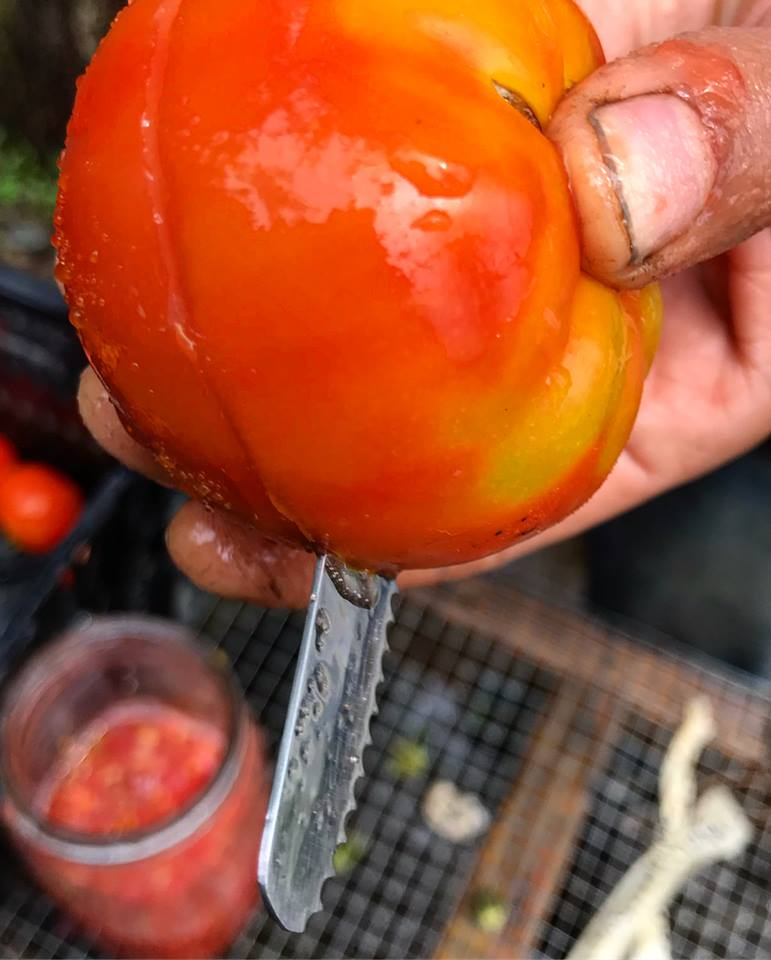 tomato knife.jpg