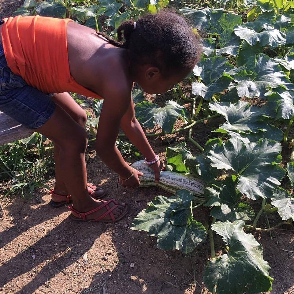 harvest squash girl.jpg