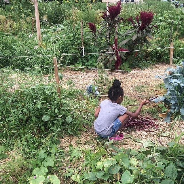 long beans girl harvest.jpg