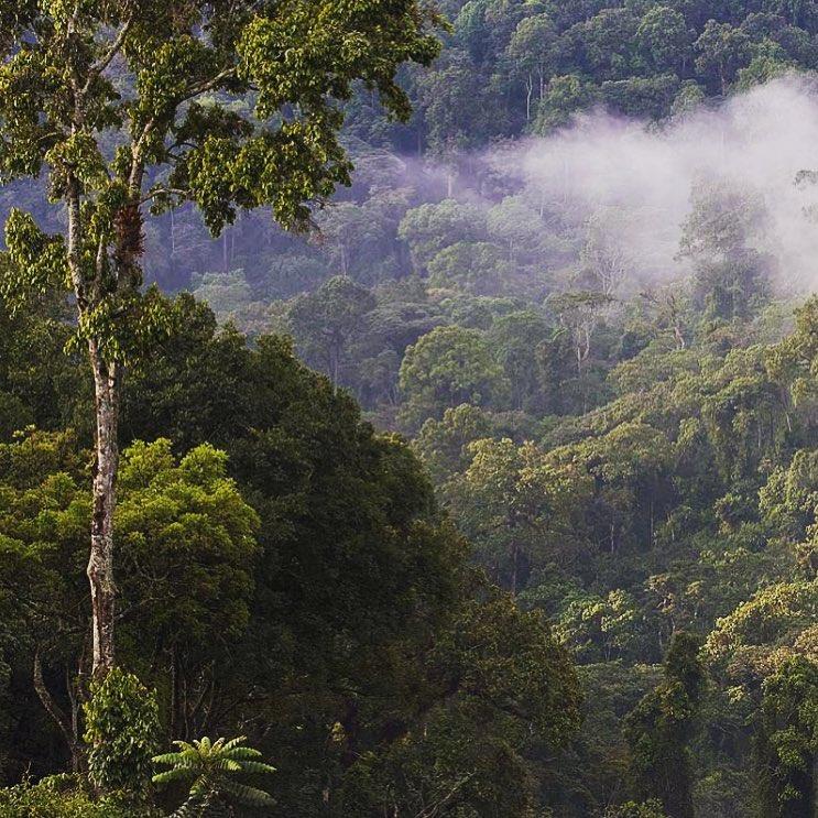 Gera Forest Ethiopia.jpg