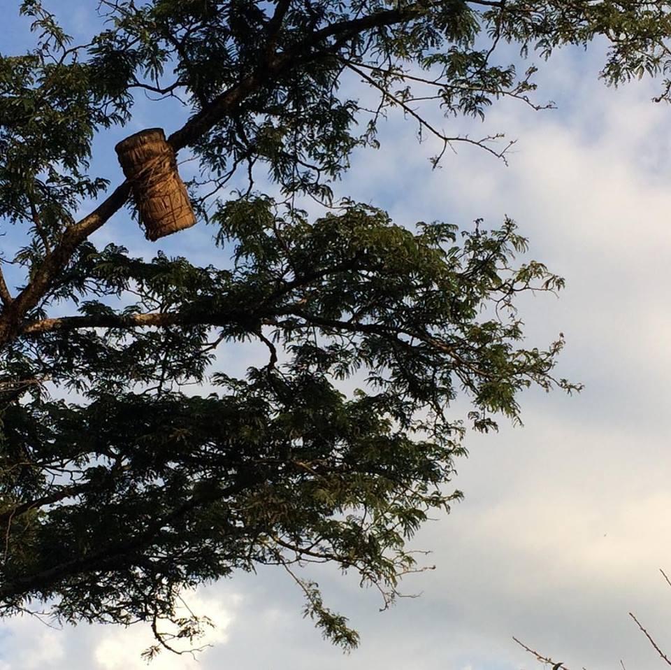 hanging hive.jpg