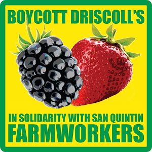 boycott_Driscolls graphic.png