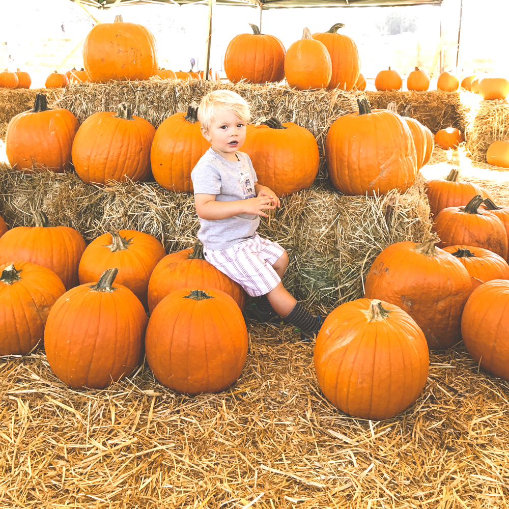 pumpkin patch fall autumn halloween family kids family time mom style mommy blog