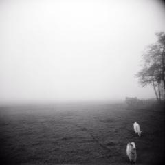 Poetics of the Landscape XX