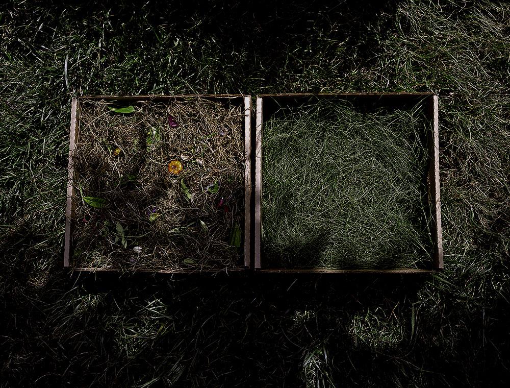 Cut Grass, Dried and Fresh