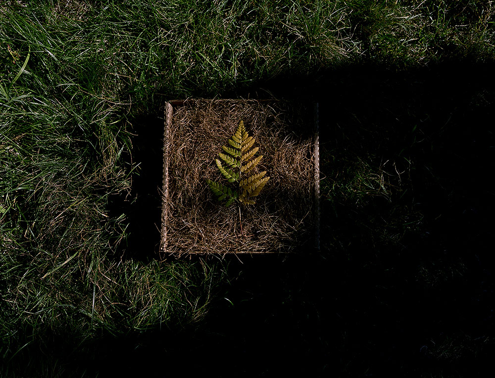 Fern Leaf on Dried Grass