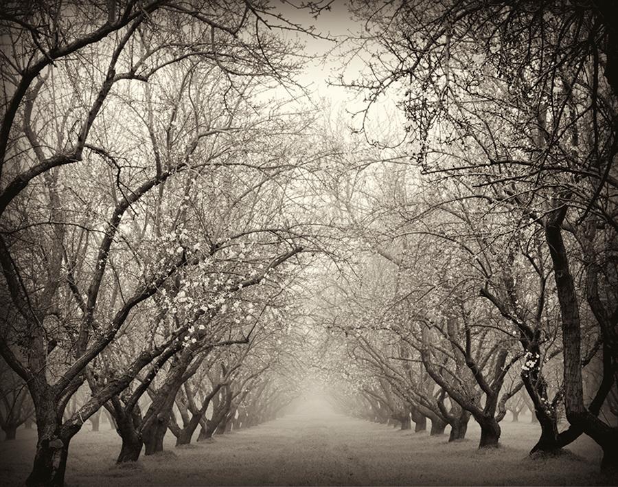 Almonds Late Winter