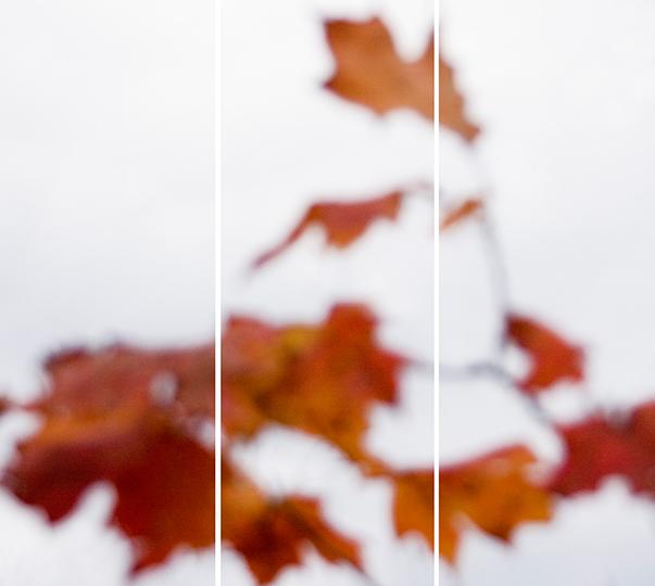 Sugar Maple Floaters (Orange) No. 6