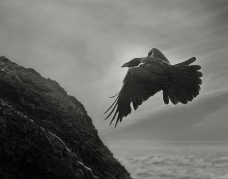 Odin's Cove #14