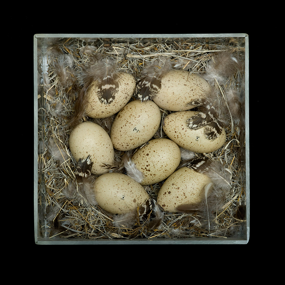 Sharon Beals, Nests, 2011