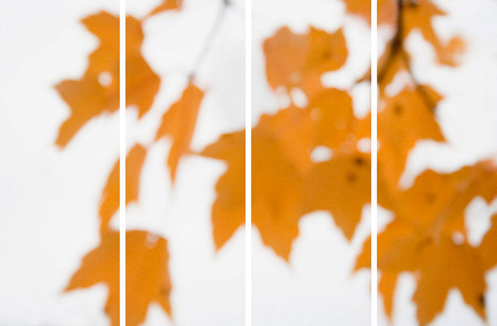 Sugar Maple Floaters (Orange) No. 3