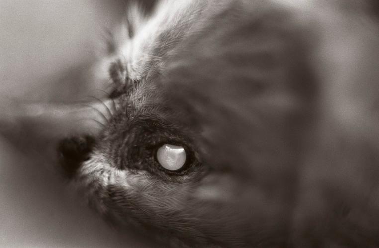 Untitled (eye)