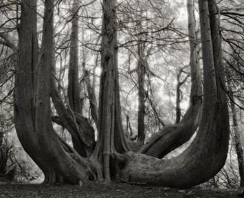 Great Western Red Cedar