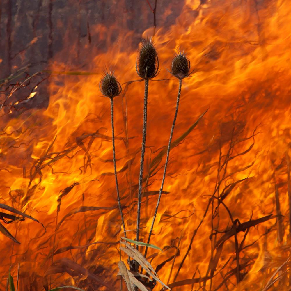 The Burn No.92