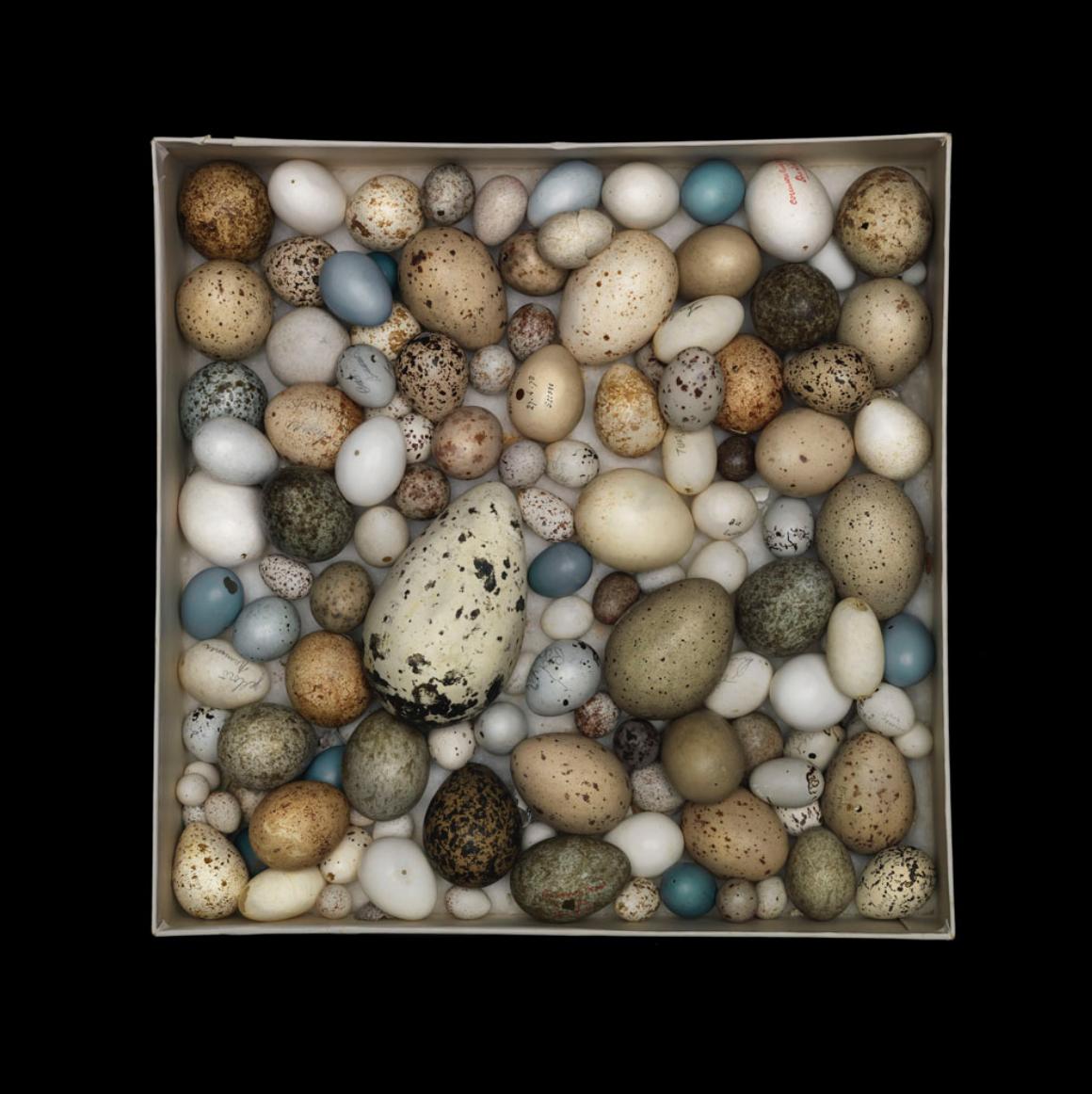 Sharon Beals, Orphan Egg Box