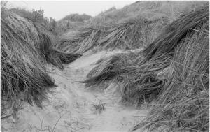 Arthur Cohen, Año Nuevo Dunes #2
