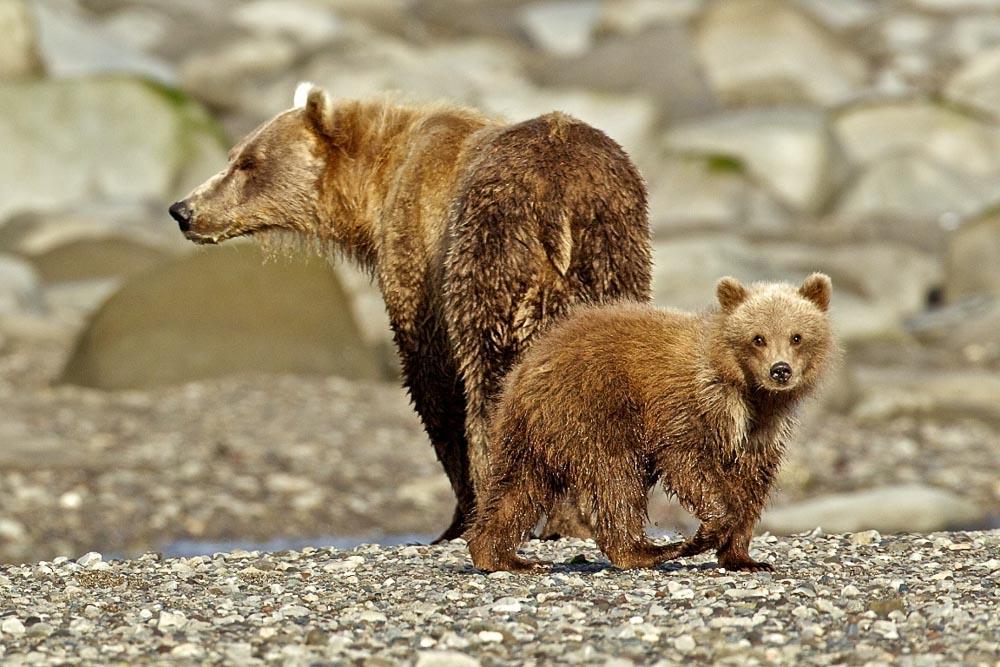 Bears_016.jpg
