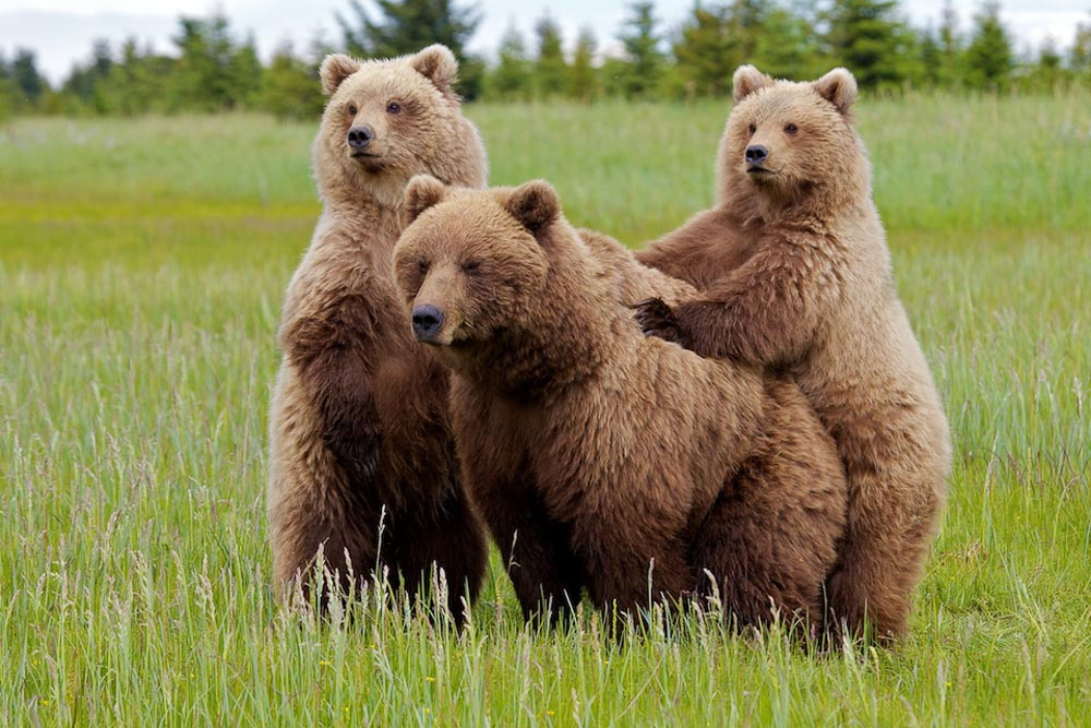 Bears_054.jpg