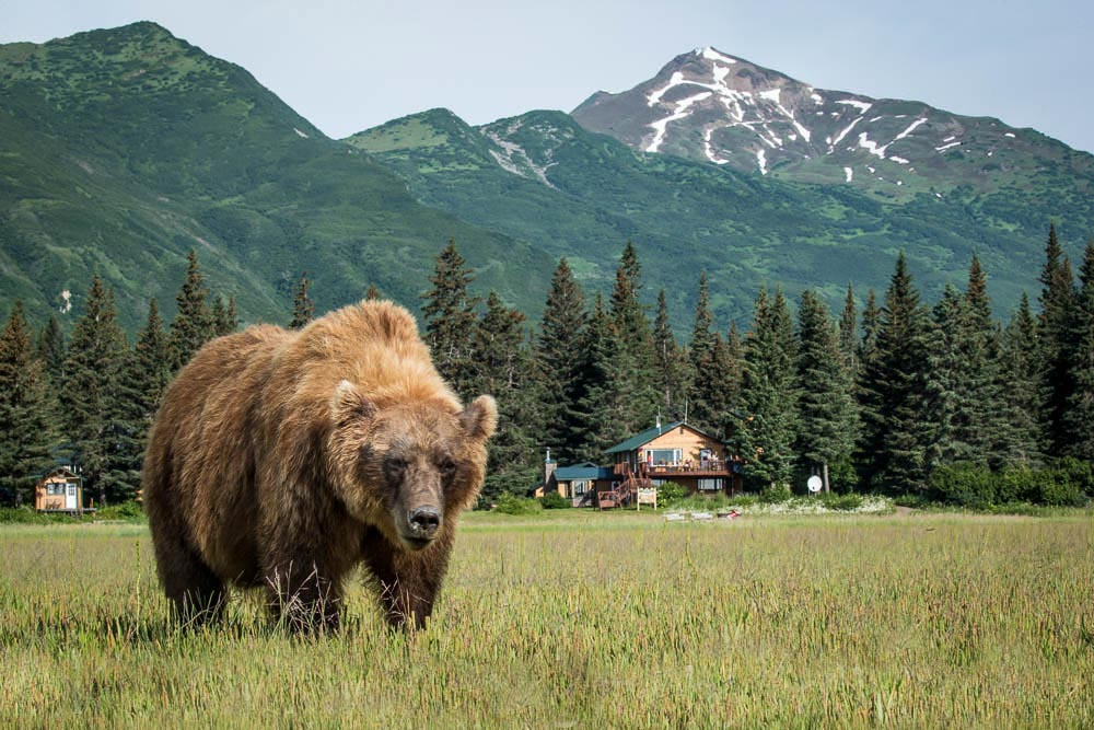 Bear_lodge.jpg