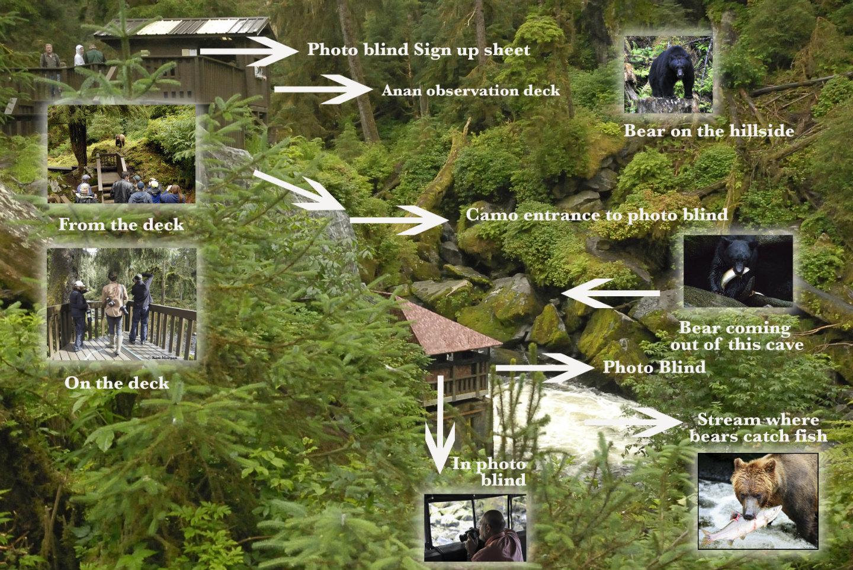 Anan-bear-observatory-info.jpg