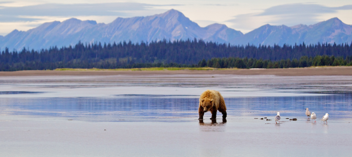 Bears_011.jpg