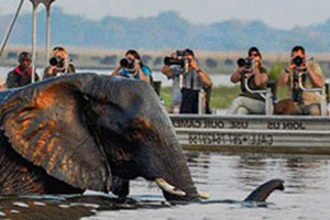 boat_elephant_reverse.jpg