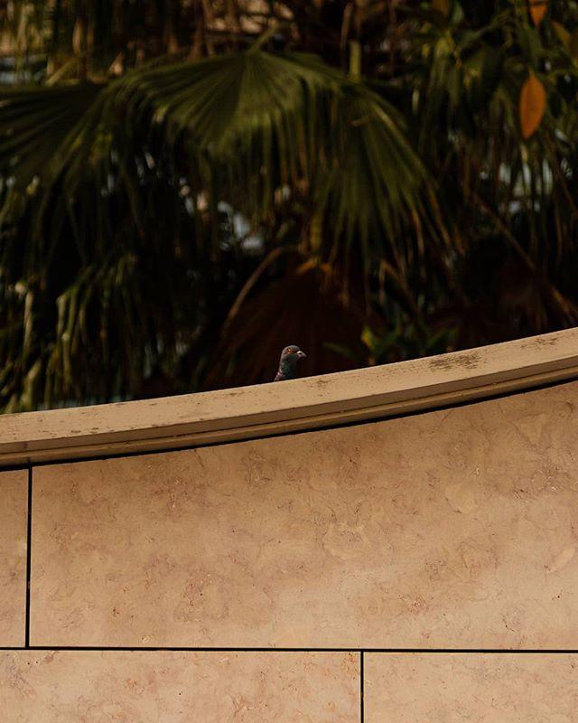 • T A K E  F L I G H T • / / / #pigeon #lisbon #warmgrade #curves #shadows #bird #motion #takingflight #minimalphotography #minimalism #minimalvibes #arte_minimal