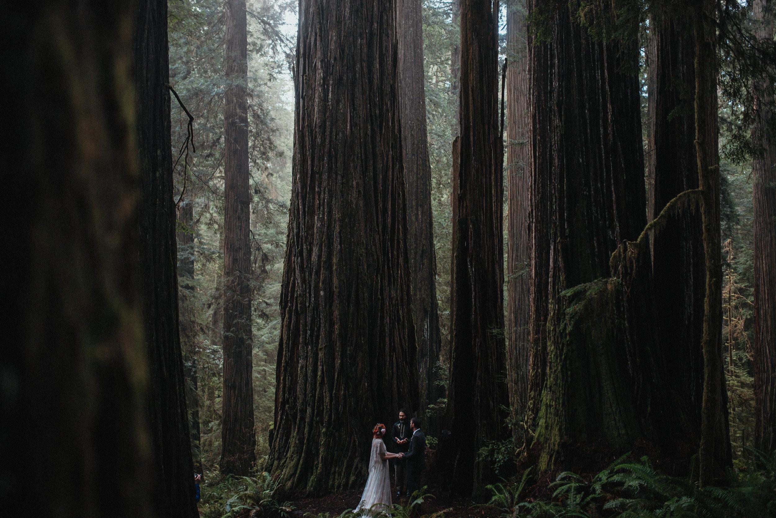 Rainy Redwoods Elopement -