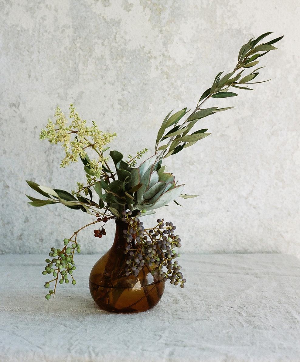 succulents2film.jpg