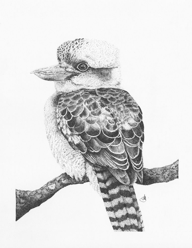 Kookaburra, 2016