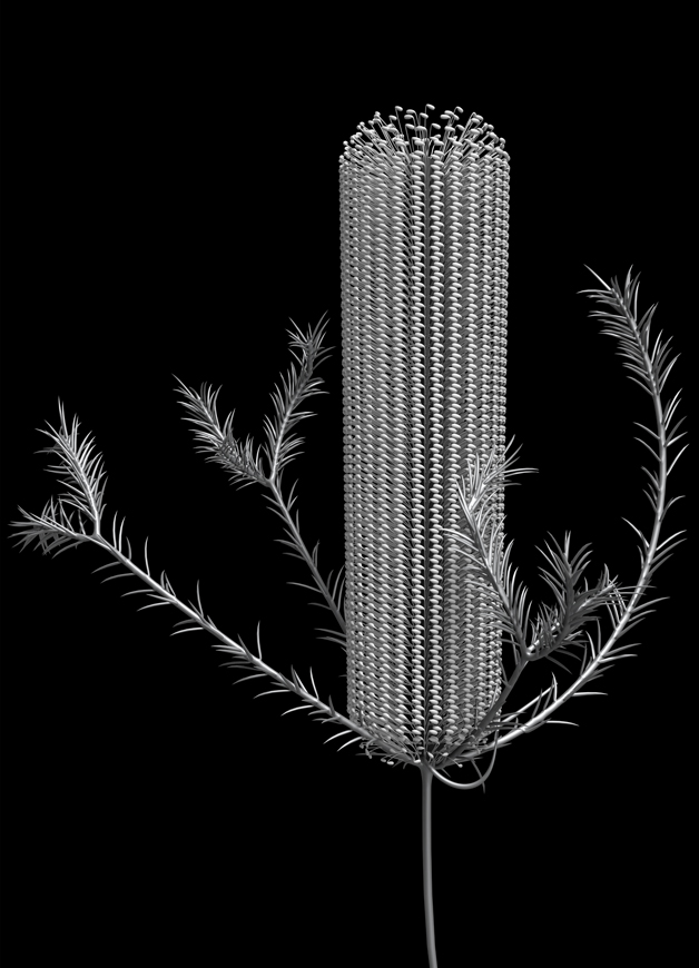 botanic_architecture/banksia_module_01, 2019