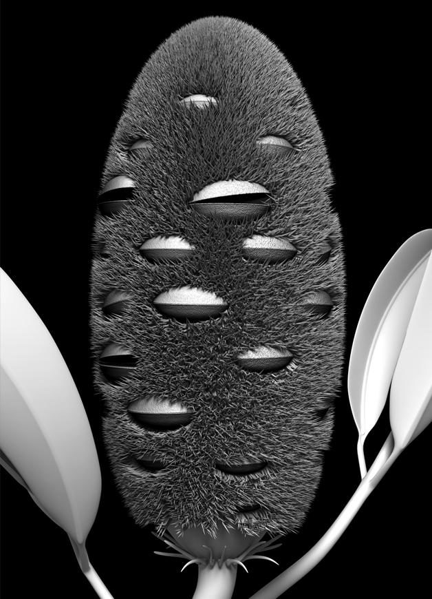 botanic_architecture/banksia_module_02, 2019