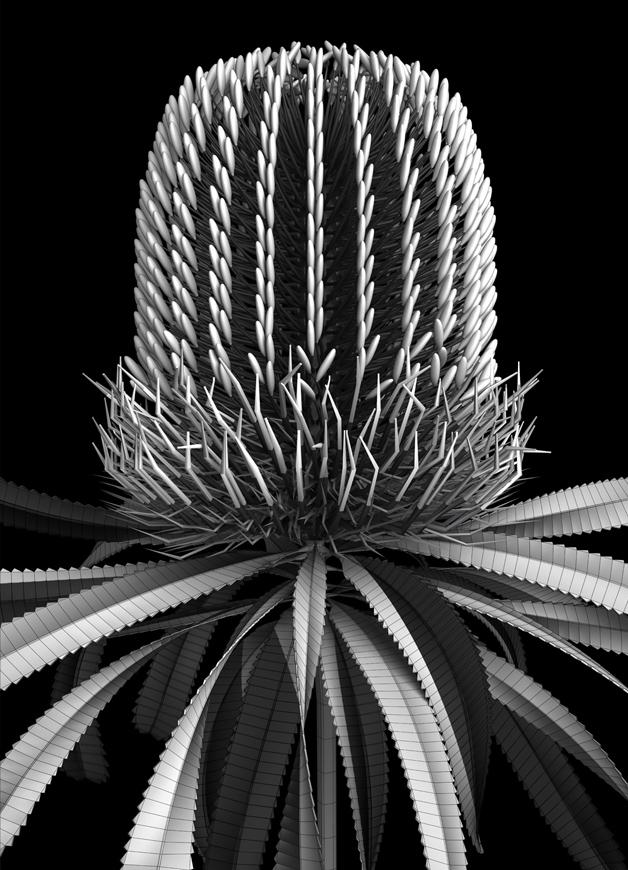 botanic_architecture/banksia_module_08, 2019