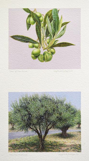 Olive Trees/Greek Gold, 2018