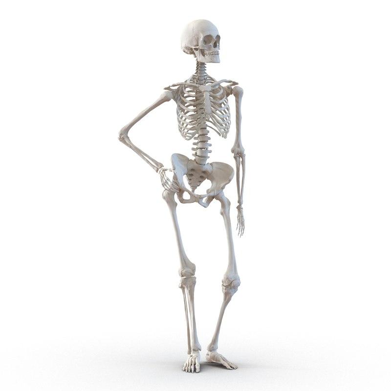 HumanFemaleSkeleton3d.jpg