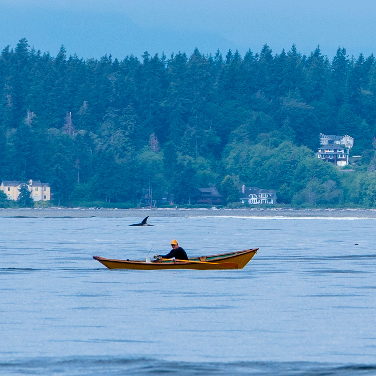 Noticing an Orca in Puget Sound