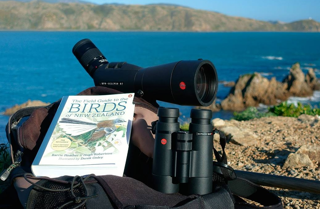 Essentials: A sturdy pair of Binoculars and spotting scope along with an appropriate field guide. Optics can be provided on request.