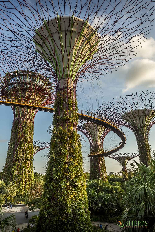 Singapore - Botanical Gardens