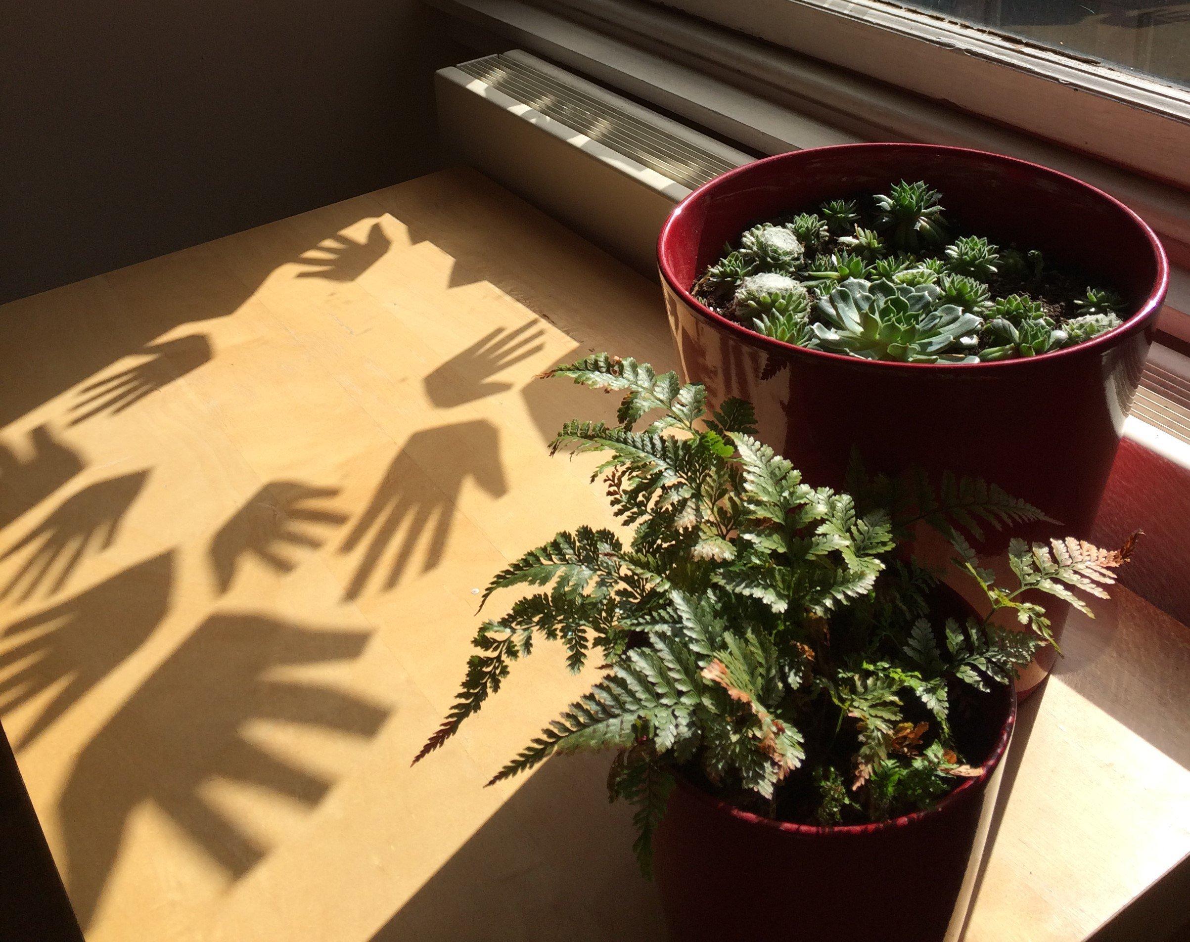 PLANTS TMP.jpg